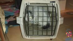 Esterilización de tres gatos de colonia en San Martín de la Vega (Madrid) de la entidad La Estrella Animal SMV