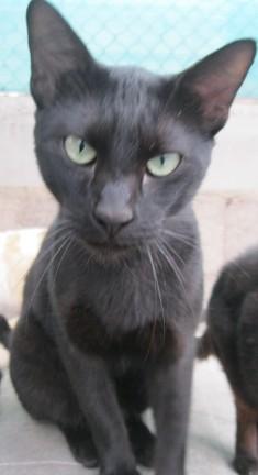 Esterilizaciones de 6 gatos de Tara Verde