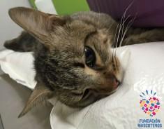 Seis gatos de colonia en polígono de Leganés (Madrid)