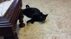 Esterilizaciones de colonia felina en Guardamar
