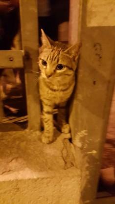 Esterilizaciones de colonia felina en Aluche