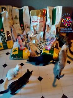 Donación alimento para un mes para Colonia Felina en Córdoba