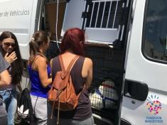 Esterilización de seis perros de la Asociación ACUDAME Mérida