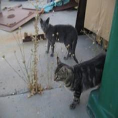 Colonia de gatos en La Garena
