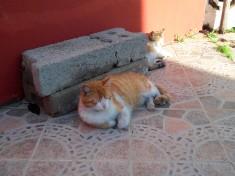 Esterilizaciones de colonia felina de Eduardo