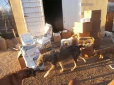 Donación de alimento a Gatonymus Esterilizaciones, Asociación Peludosos y El Valle Encantado