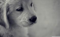39 perros de vivienda desalojada en Priego
