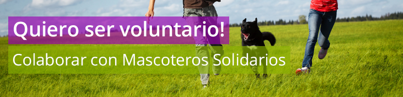 Header voluntariado mascoteros solidarios